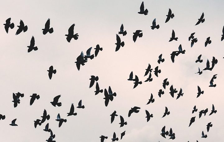 Testbirds-spring